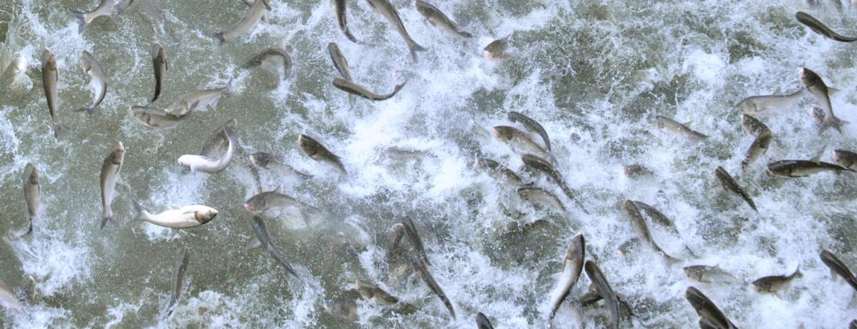 TNWF.org – RSVP for Next Asian Carp Grassroots Action Call